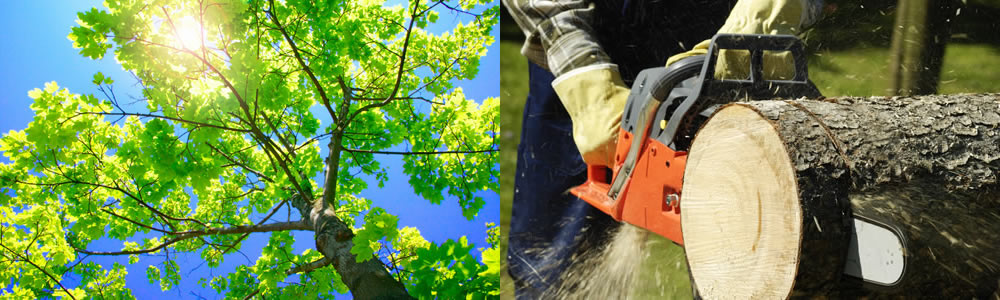 Tree Services Bellevue